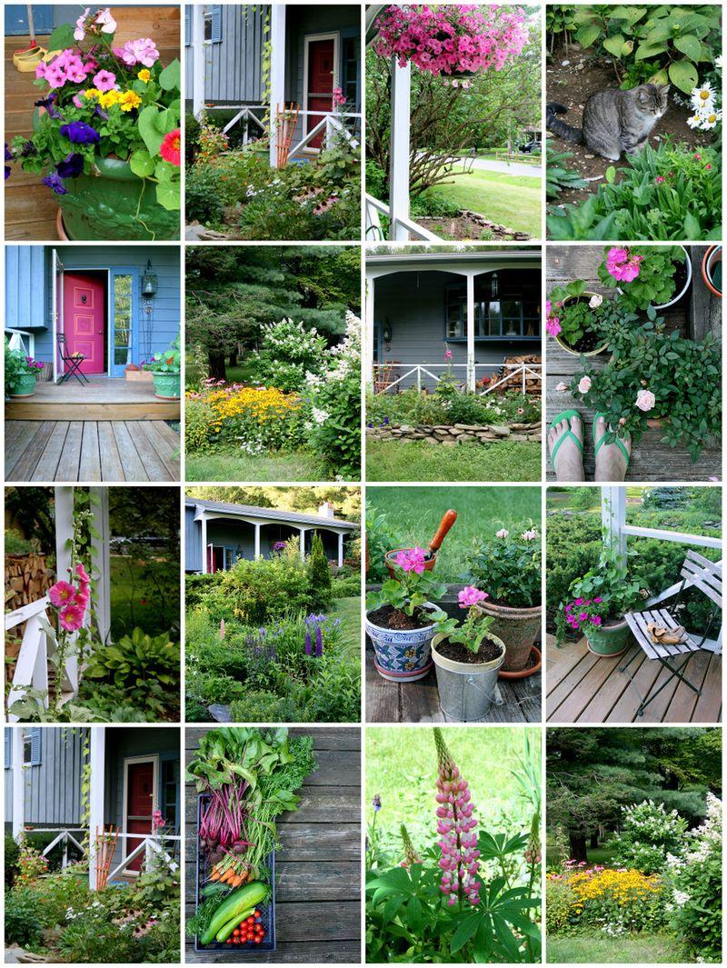 Garden summer 2011 blog