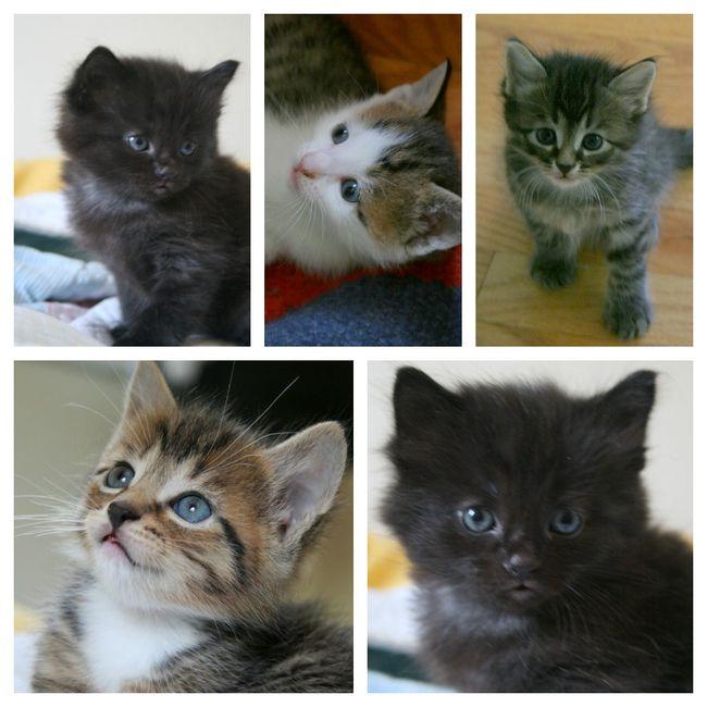 Kitty blog3