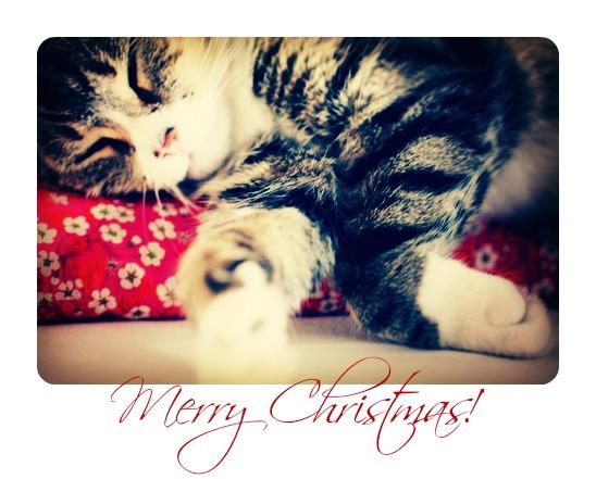 Merry kitty
